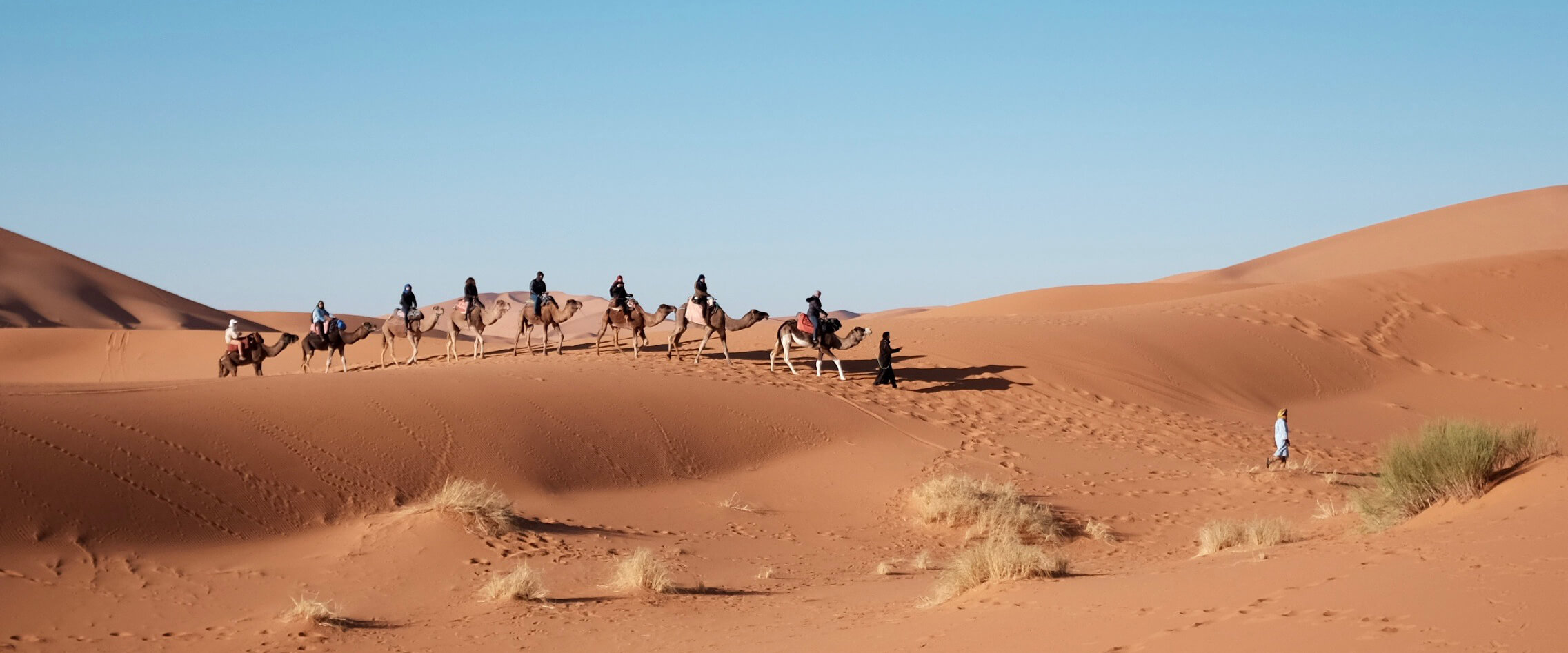 Arabs riding camels through the desert
